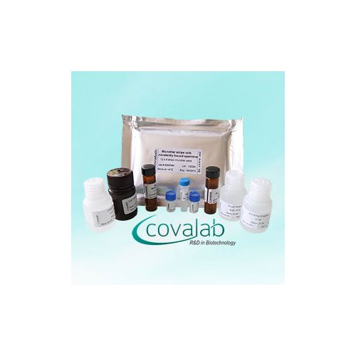 Specific Keratinocyte Transglutaminase (Tgase-1) Colorimetric Microassay Kit : TG1-CovTest