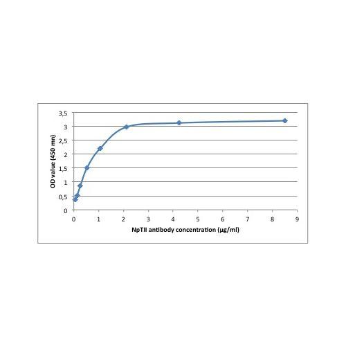 NPTII antibody