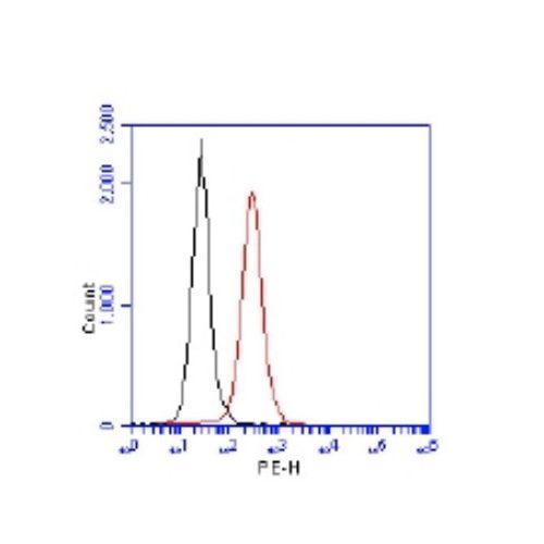 53BP1 antibody