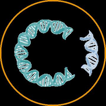 DNA Immunization Gene Cloning