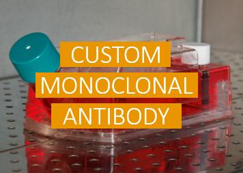 Custom Monoclonal Antibody