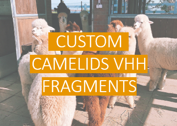 Custom Camelids VHH Fragments