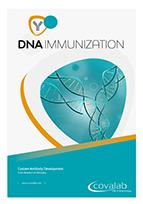 Custom DNA immunization antibody
