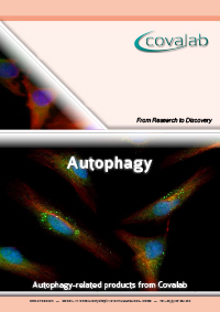 Autophagy signalling pathway