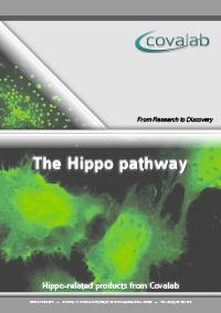 Hippo signalling pathway