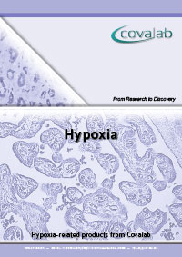 Hypoxia signalling pathway