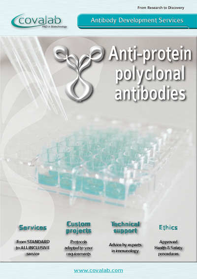 Custom anti-protein polyclonal antibodies