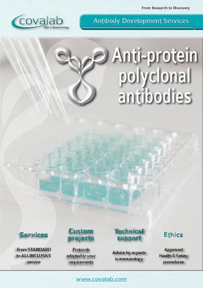 Custom anti-protein polyclonal antibodies