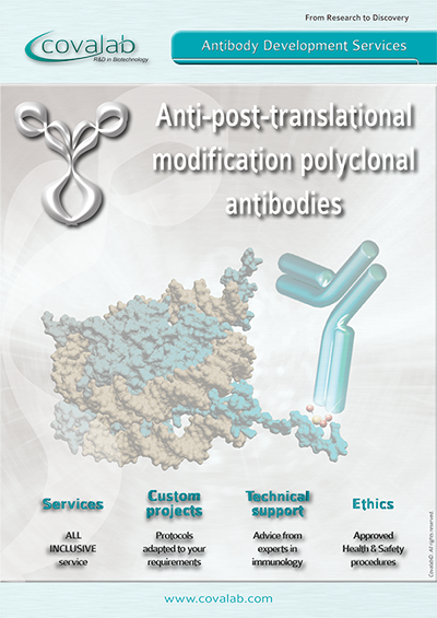Custom anti-PTM polyclonal antibodies