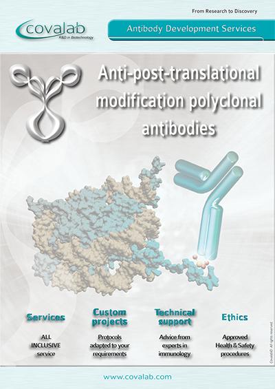 Custom anti-PTM polyclonal antibodies
