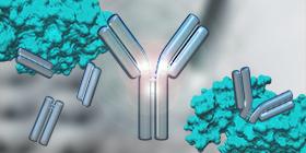Antibody Fragmentation